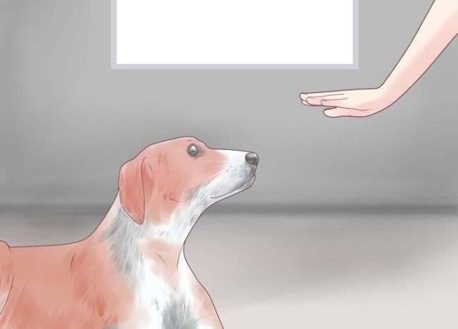 Neden köpekler Howl Bize ne anlatmak istiyorlar